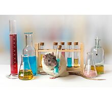 Working at the Laboratory Photographic Print