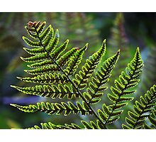 Tiny Fern Aglow Photographic Print