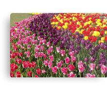 Tulip Garden in the Mid-day Sun Metal Print