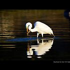 Ardea Alba - Great White Egret Catching Fish In Porpoise Channel - Stony Brook, New York by  Sophie Smith