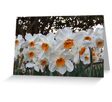 Lush & Alluring Mini Daffodils Greeting Card