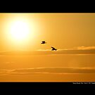Two Seagulls Flying Towards The Burning Evening Sun - Stony Brook, New York  by © Sophie Smith