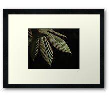 Ridged Leaf Springtime Framed Print