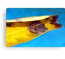 Floating toad Canvas Print
