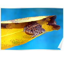 Floating toad Poster