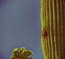Saguaro in Bloom - V2 by Judi FitzPatrick