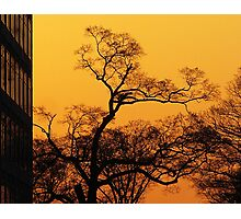 Tree and Morning Sky Photographic Print