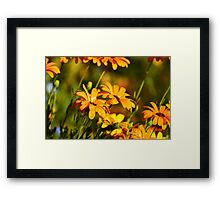 Flowers in Spring Framed Print