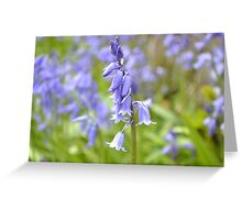 Field of bluebells  Greeting Card