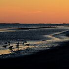 South Carolina Sunset and Birds by Mike Oliver