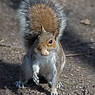 Grey Squirrel with Nutty Brunch by DonMc
