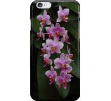 The rare purple orchid iPhone Case/Skin