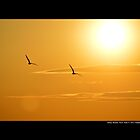 Two Seagulls Flying Under The Burning Evening Sun - Stony Brook, New York  by © Sophie Smith