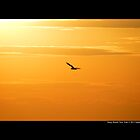 Seagull Flying Under The Burning Evening Sun - Stony Brook, New York  by © Sophie Smith