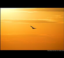Seagull Flying Under The Burning Evening Sun - Stony Brook, New York  by © Sophie W. Smith