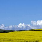 Fields of Yellow by mikebov