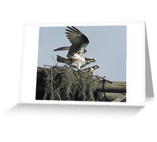 Florida Osprey family in nest Greeting Card