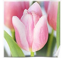 ~ Tulips ~ Poster