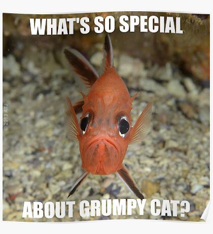 What's So Special About Grumpy Cat? Poster