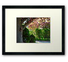 Pink blossoms adrift Framed Print