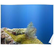 Christmas Tree Worms Poster
