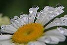 Bubble Bath by NatureGreeting Cards ©ccwri