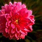 Red Burst by cclaude