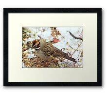 Lark Sparrow Framed Print