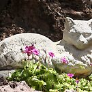 Garden Kitty by Heather Friedman