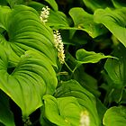 Hostas Gone Wild by Barbara  Brown