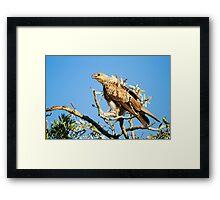 Evening Hunting Framed Print