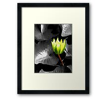 Yellow Waterlily Framed Print