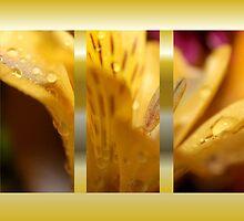 Daylily Collage by aprilann