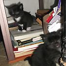 2 kittens at bookself -(180513)- Digital photo/FujiFilm FinePix AX350 by paulramnora