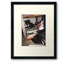 2 kittens at bookself -(180513)- Digital photo/FujiFilm FinePix AX350 Framed Print