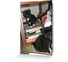 2 kittens at bookself -(180513)- Digital photo/FujiFilm FinePix AX350 Greeting Card