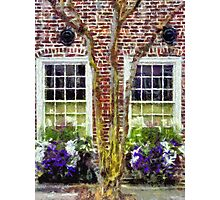 Charleston's Window Boxes Photographic Print