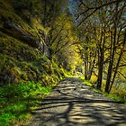 Shadows On The Trail by Charles &amp; Patricia   Harkins ~ Picture Oregon