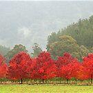 True to Colour - Bright - Victoria - Australia by Michael Tapping