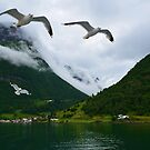 Sea Gulls by Tamara Al Bahri
