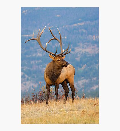 The King Of Autumn  Photographic Print