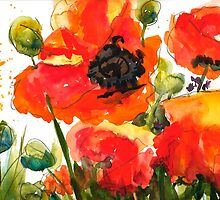 Kate's Poppys by Sally Griffin