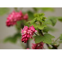 Nectar-Filled Spring-Time Treat Photographic Print