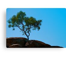 Rooted in Rock Canvas Print