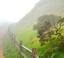 Corona Fog by BrightFogPhoto