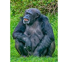 Grinning Chimp Photographic Print