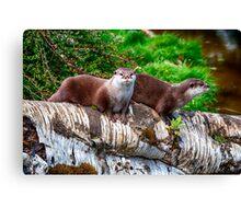 European Otters Canvas Print