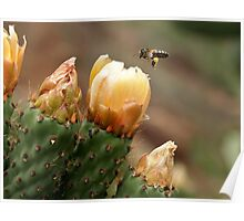 Plundered Prickly Pear Poster