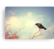 Perch Canvas Print