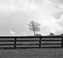 Stormy Spring by BrightFogPhoto